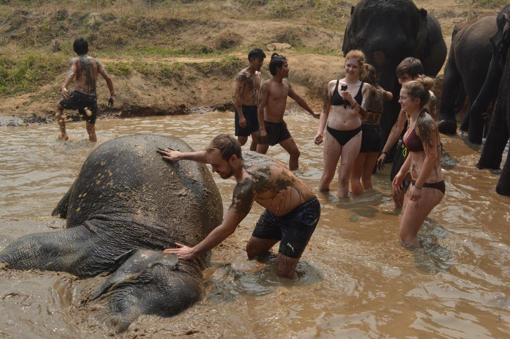 A Day at Elephantland in Chiang Mai