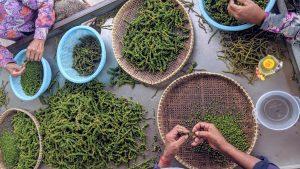 "Tasting the ""Worlds Best Pepper"" at La Plantation in Kampot"