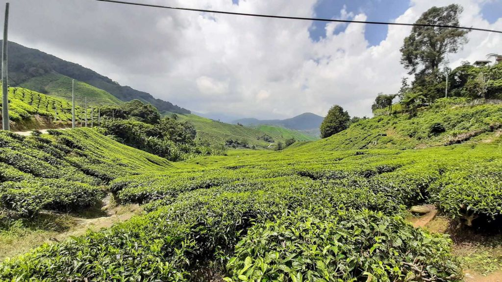 A Guide to Tanah Rata and the Cameron Highlands, Malaysia